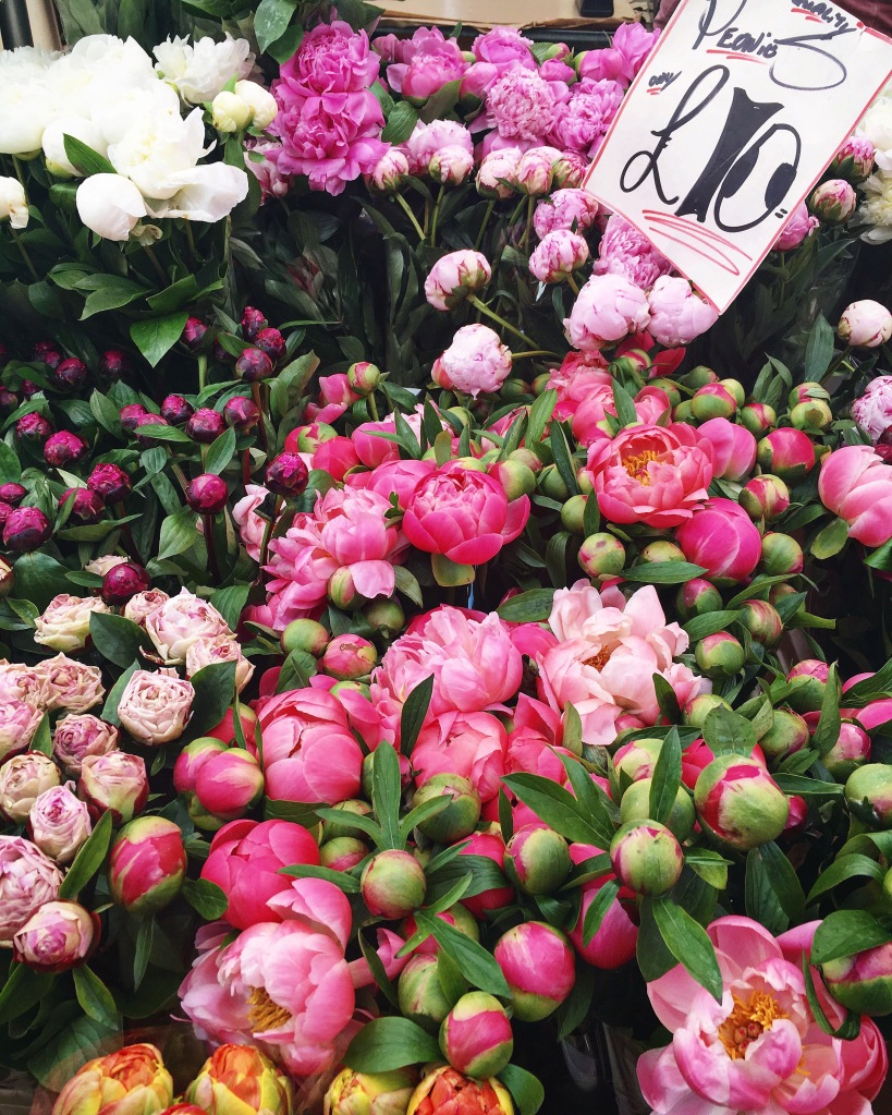 Colourful peonies