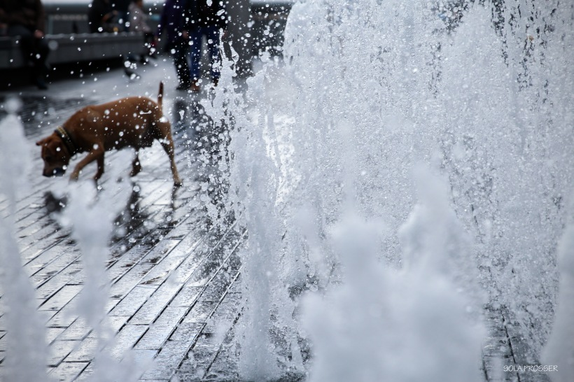 'A Dog's Delight' - This dog played excitedly with the jet streams of the water fountain. It frantically tried to catch the water with its paws and drink it at the same time. I captured this image moments before the dog made another quick dash into the main part of the fountain.