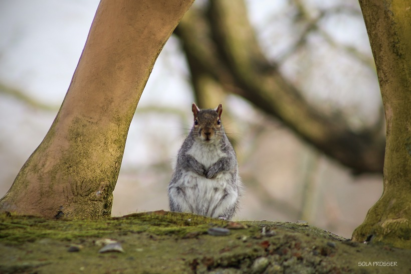 'Why Hello There'! - This was one of the more difficult photos I have taken. The squirrel and I played hide and seek before we eventually locked eyes and I was able to snap this lovely image.